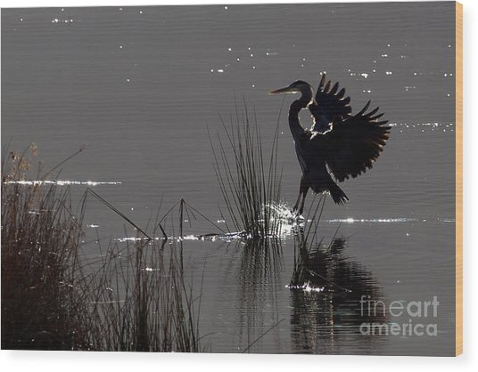 Great Blue Heron Silhouette Wood Print by Sharon Talson