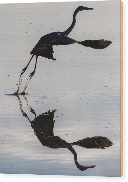 Great Blue Heron Takeoff Wood Print