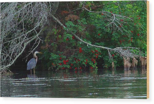 Great Blue Heron Wading Wood Print by James Hammen