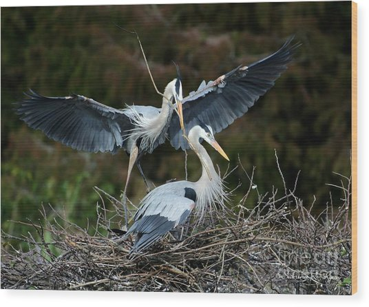 Great Blue Herons Nesting Wood Print