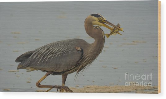 Great Blue Herron Eating Fish Wood Print