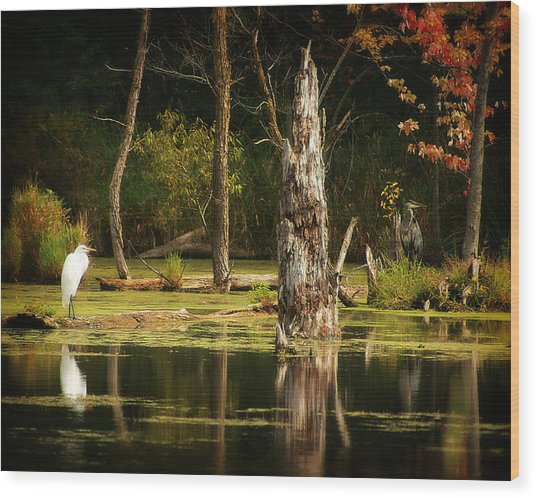Great Egret And Great Blue Heron Wood Print by Scott Hovind