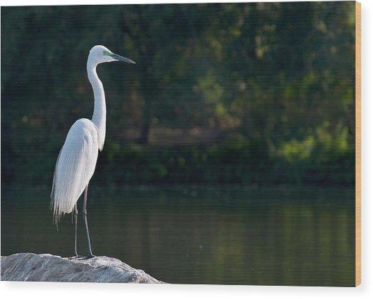 Great Egret At Water's Edge Wood Print by K Jayaram