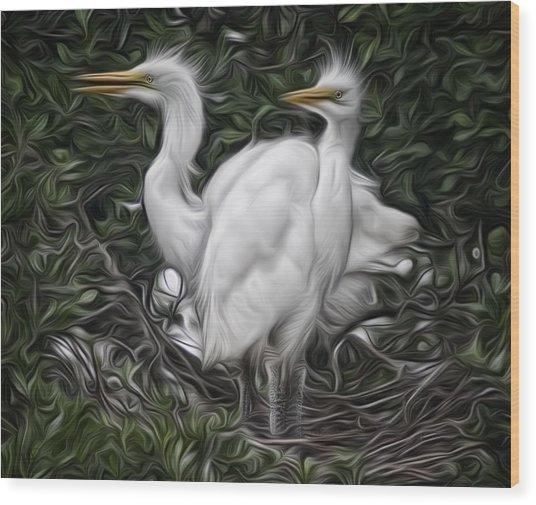 Great Egret Chicks Wood Print by Hazel Billingsley