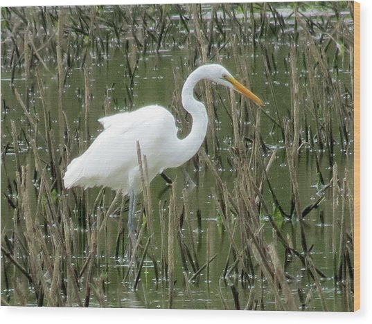 Great Egret Wood Print