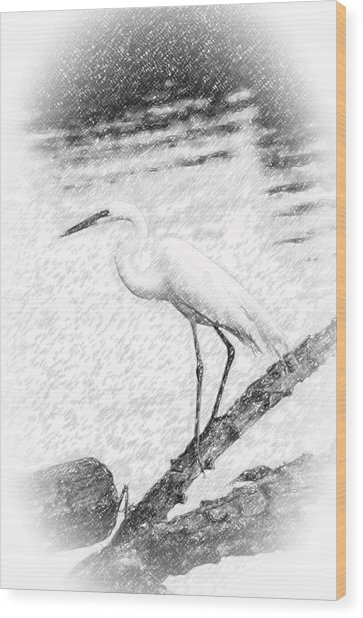 Great Egret Fishing Pencil Sketch Wood Print