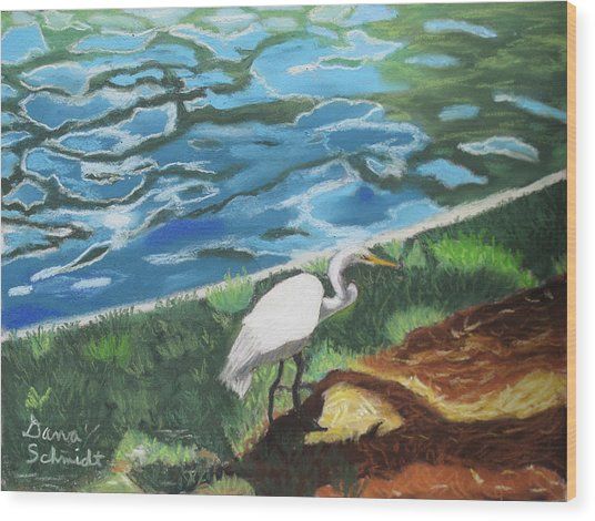Great Egret In Florida Wood Print