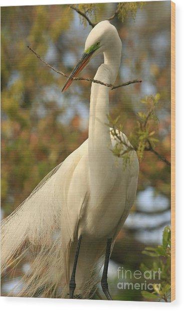 Great Egret Impressions Wood Print