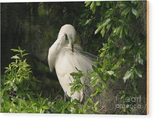 Great Egret Preen Wood Print