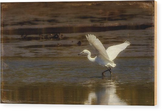 Great Egret Taking Off Wood Print