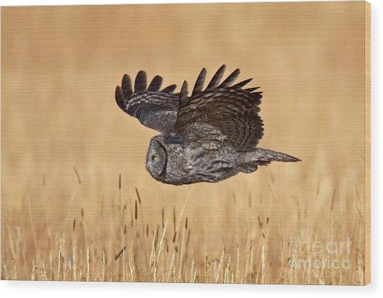 Great Gray Flight Wood Print