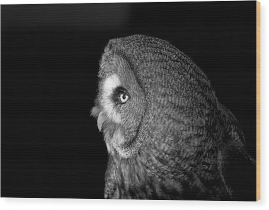 Great Grey Owl 6 Wood Print by Simon Gregory