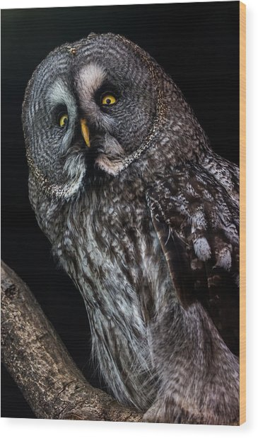 Great Grey Owl Wood Print by Gerard Pearson