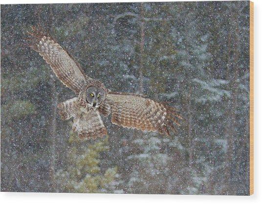 Great Grey Owl In Snowfall Wood Print
