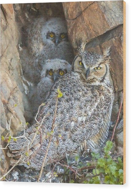 Great Horned Owl And Owlets Wood Print