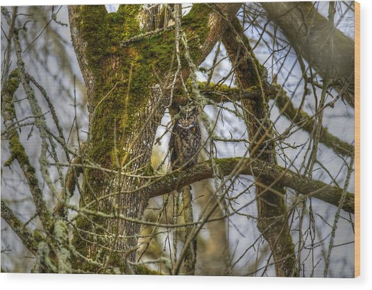 Great Horned Owl Wood Print by David Yack