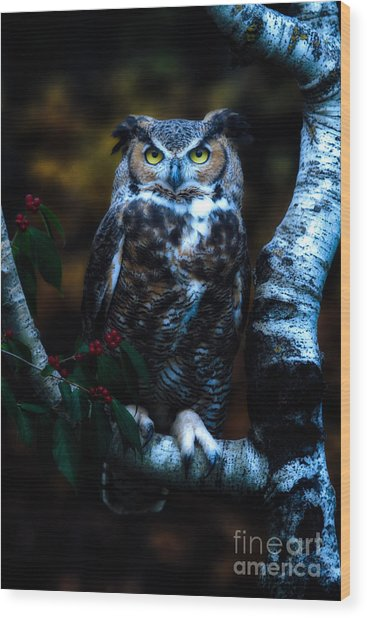 Great Horned Owl II Wood Print by Todd Bielby
