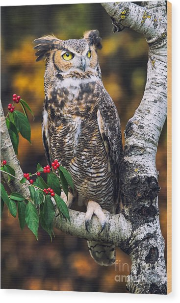 Great Horned Owl IIi Wood Print by Todd Bielby