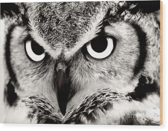 Great Horned Owl In Black And White Wood Print