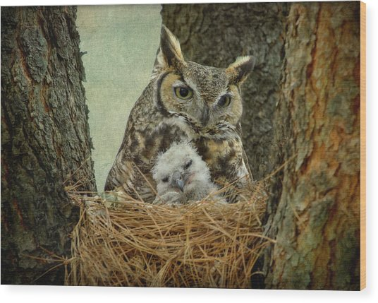 Great Horned Owl Mom And Baby Wood Print by Cgander Photography