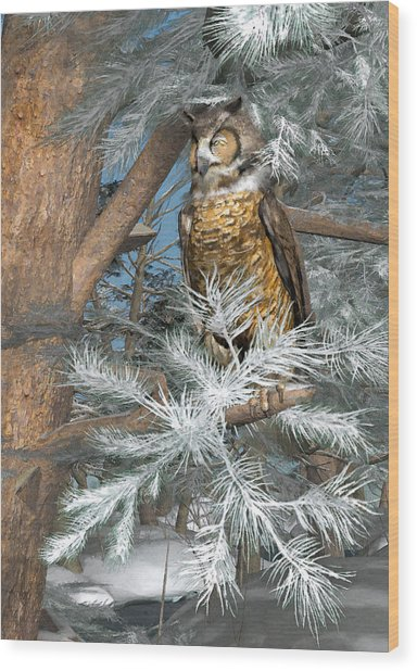 Great Horned Owl Wood Print by Peter J Sucy