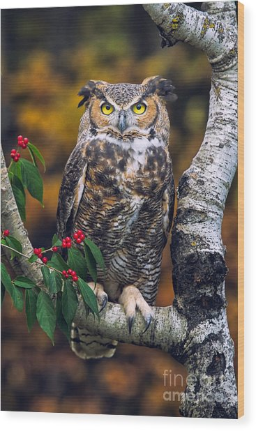 Great Horned Owl Wood Print by Todd Bielby