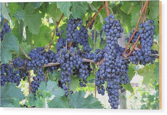 Great Lakes Vineyard Near Lake Erie Wood Print