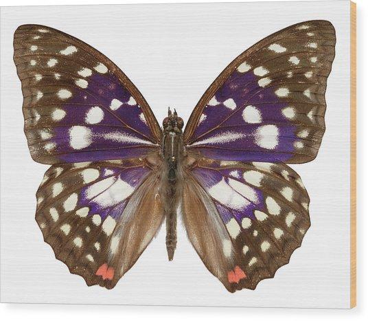 Great Purple Butterfly Wood Print