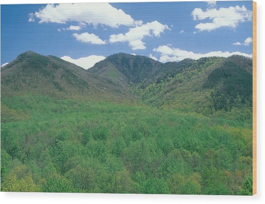 Great Smokey Mountains National Park, Tn Wood Print by James Steinberg