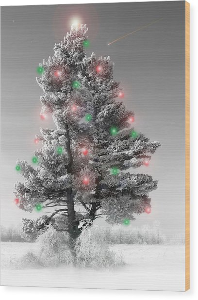 Great White Christmas Pine Wood Print
