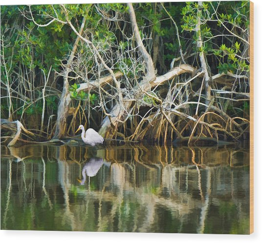 Great White Egret And Reflection In Swamp Mangroves Wood Print