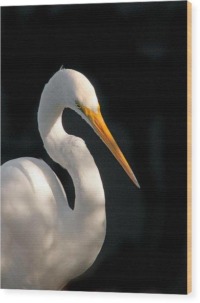 Great White Egret Portrait. Merritt Island N.w.r. Wood Print