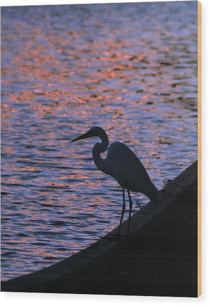 Great White Egret Silhouette  Wood Print