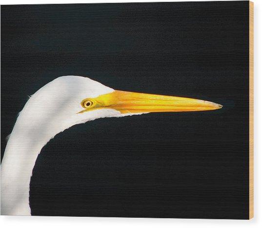 Great White Headshot. Merritt Island N.w.r. Wood Print