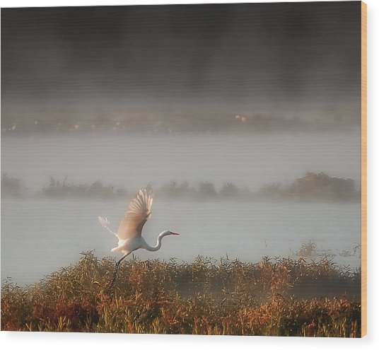 Great White Heron In Morning Mist Wood Print