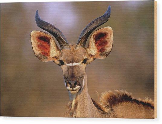 Greater Kudu Wood Print by Tony Camacho/science Photo Library