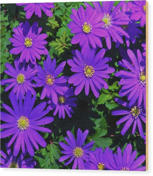 Grecian Wildflowers 2 Wood Print