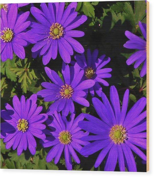 Grecian Wildflowers Wood Print