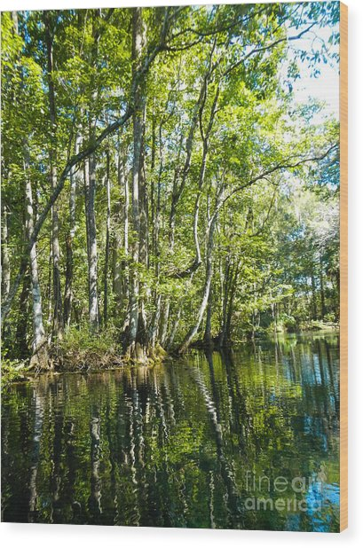 Gree Trees And Water  Wood Print
