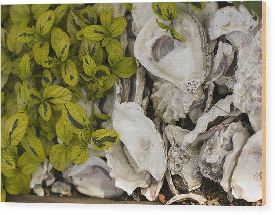 Green Abalone Wood Print