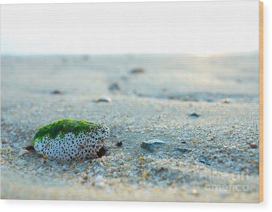 Green Algae Rock Wood Print by Wei Kuan Tay