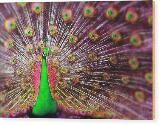 Green And Pink Peacock Wood Print by Diana Shively