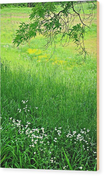 Green Wood Print by Beverly Hammond