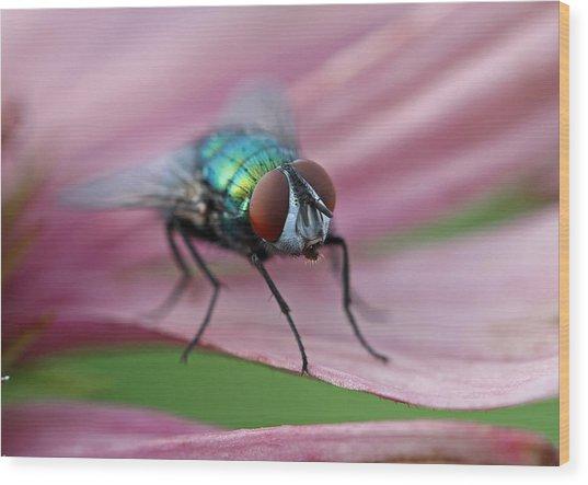 Green Bottle Fly Wood Print