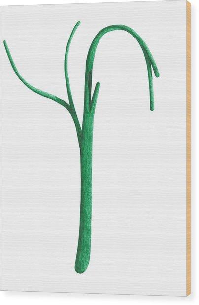 Green Branche Wood Print