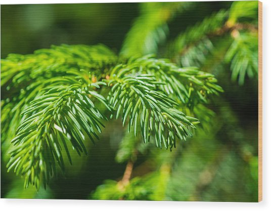 Green Christmas Tree 2 Wood Print