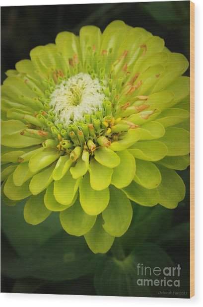 Green Dahlia Wood Print