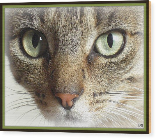 Green Eyed Cat Face Wood Print