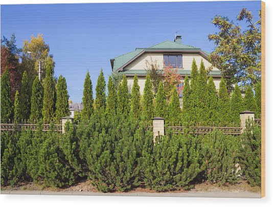 Green Fence Of Trees And Shrubs Wood Print by Aleksandr Volkov