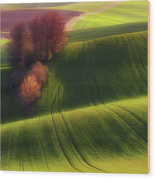 Green Fields Wood Print